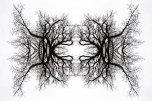 Confinés 2020 - Cristallographie Végétale confinée