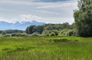 Le Marais du Sionnet, Campagne Geneve, Suisse - Wettach Jean-Marc@2020