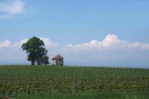 Vignoble-de-Compesiere-Bardonnex-Suisse