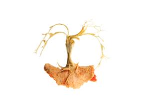 Mes-iles-clementines-01-Pierre-Olingue