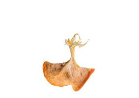 Mes-iles-clementines-06-Pierre-Olingue.jpg