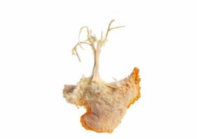 Mes-iles-clementines-10-Pierre-Olingue.jpg