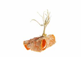 Mes-iles-clementines-11-Pierre-Olingue.jpg