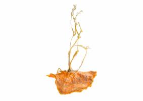 Mes-iles-clementines-12-Pierre-Olingue.jpg